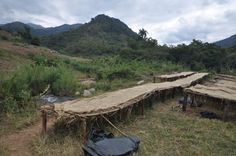 Coffee Processing/Drying