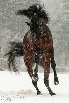 playful in the snow....