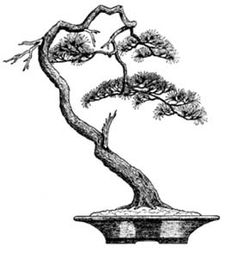 Literati or Bunjin Bonsai - Szukaj w Google