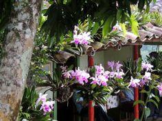Aprenda 5 dicas secretas guardadas a 7 chaves pelos profissionais mais renomados para fazer suas orquídeas florir todo ano. Veja AGORA!