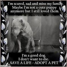 help if you can ... adopt a pet today