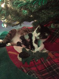 A Festive Cat Gives Birth to Adorable Kittens Underneath Her Human's Cozy Christmas Tree