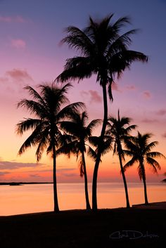 The Florida Keys, Florida, USA // sunset palms