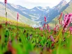 The Valley of Flowers in West Himalayas- India