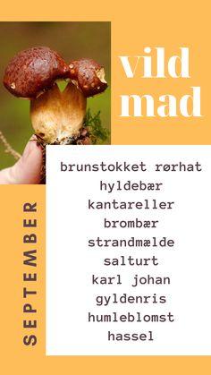 Vild mad i september måned i Danmark byder på meget nyt vildt spiseligt!  Rørhatte, hyldebær, kantareller, brombær, strandmælde, salturt, karl johan, gyldenris, humleblomst og hassel.  En dejlig variation af bær, svampe og nødder. Karl Johan, September, Mad, Vegetables, Tips, Vegetable Recipes, Veggies, Counseling