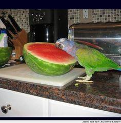 Sweet, sweet watermelon
