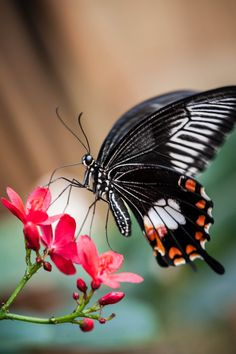 Butterfly by Justin Lo