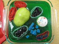 Plant Cell Model Ideas: Clay, Edible, Recycled, and How to Make It Plant Cell Structure, Plant Cell Model, Fair Projects, School Projects, Projects To Try, Simple Plant Cell, Plant Cell Organelles, Plant Cell Project, Animal Cell