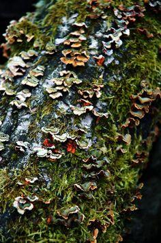 Fungus on Wood