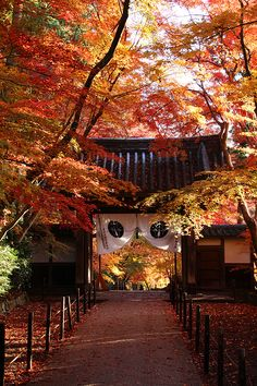 Kyoto, Japan via 大原野神社の紅葉Autumn Leaves