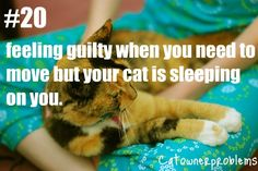 Cat Owner Problems - ALL THE TIME!!   ...........click here to find out more     http://googydog.com