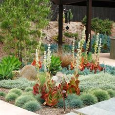Debora Carl Landscape Design i love her use of succulents and xeriscape! Succulents Garden, Garden Plants, Colorful Succulents, Succulent Plants, Water Plants, Tall Succulents, Blue Plants, Flowering Plants, Cactus Plants