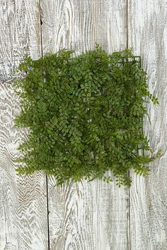 Decorative Ornaments Decor for Home Wedding Party, Fern Mat 10x10 inch square 1.5 of leafy depth >>> Click image to review more details. (This is an affiliate link and I receive a commission for the sales)