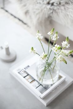 Minimal Flowers (picture by Nina Holst)