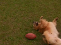 Screencap Gallery for Air Bud: Golden Receiver (1998) (480p DVD, Air Bud / Buddies, Disney Live-Action). The Golden Reciever picks up where Air Bud left off. Josh, now legal owner of Buddy, now plays football with Buddy instead of Basketball! The movie takes p