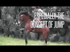 "10 Horses Who Forgot How to ""Horse"""