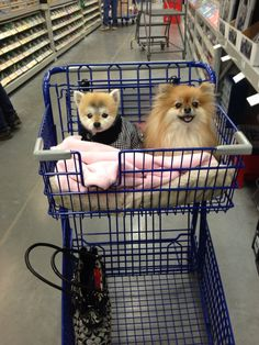 Ready to go grocery shopping!
