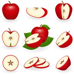 Find Vector Illustration Red Apple Sliced Apple stock images in HD and millions of other royalty-free stock photos, illustrations and vectors in the Shutterstock collection. Apple Illustration, Apple Vector, Apple Stock, Apple Painting, Tatoo Designs, Fruit Art, Apple Slices, Pottery Painting, Bottle Design