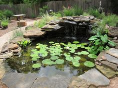 I found this article on the basics of water gardening by Kit and Ben Knotts who created a website dedicated to water gardening back in 2001. They explain the different…
