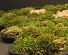 Living Bath Mats    The Moss Carpet Brings the Outdoors Into Your Bathroom