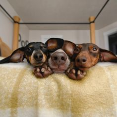"""79.8k Likes, 840 Comments - Harlow, Sage, Indiana & Reese (@harlowandsage) on Instagram: """"Ear Goggles"""""""