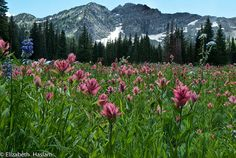 Albion Basin, Utah - one of my all-time favorite pieces of Heaven.