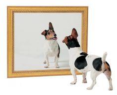 Μπορεί ο σκύλος μου να αναγνωρίσει το είδωλό του στον καθρέφτη;