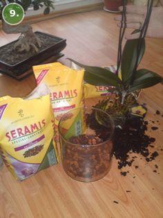 Orchidee umtopfen | Orchideen pflegen | Orchideen Ratgeber