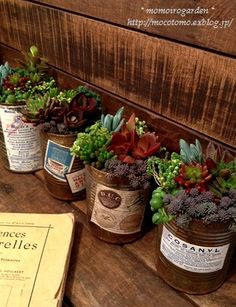Vintage Tins with succulents!  I just tried aging some regular tin cans and it worked! Gonna try making these!