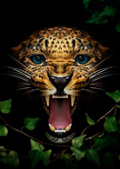 the beast of the naturejaguar head the beast of the nature poster animals wallpaper . Leopard Wallpaper, Eagle Wallpaper, Tiger Wallpaper, Animal Wallpaper, Angry Animals, Animals And Pets, Cute Animals, Nature Animals, Big Cats