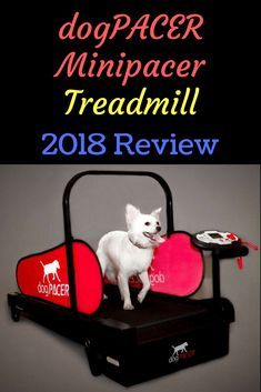 Heaven on Earth for Dogs! Dog Treadmill, Treadmill Reviews, Dog Products, Heaven On Earth, Dog Supplies, Workout, Animal, Future, Dogs