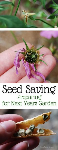 Save some money by saving your own seeds from flowers and plants in your garden…