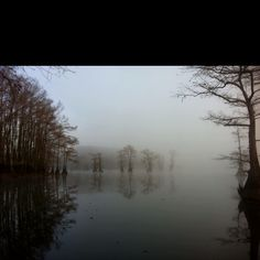 Foggy morning duck hunt on Caddo Lake, Louisiana.