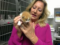 While this article goes into detail about the suspension and firing of an animal shelter director and a chief animal control officer in Jefferson Parish, Louisiana, it's a tragedy that's occurring far too frequently in Bullying And Harassment, Jefferson Parish, Animal Shelters, Animal Control, Louisiana, February, Detail, Animals, Animales
