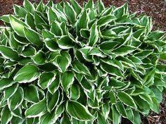 Low Maintenance Full-Sun Plants My Favorite Low-Maintenance Perennials for Sun & Shade Full Sun Landscaping, Low Maintenance Landscaping, Low Maintenance Garden, Landscaping Plants, Front Yard Landscaping, Landscaping Ideas, Landscape Maintenance, Landscaping Software, Backyard Ideas