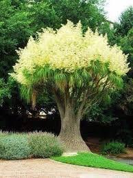 Картинки по запросу необычные деревья мира фото
