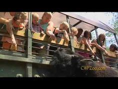 Wildlife Safari Ride at Catoctin Wildlife Preserve and Zoo