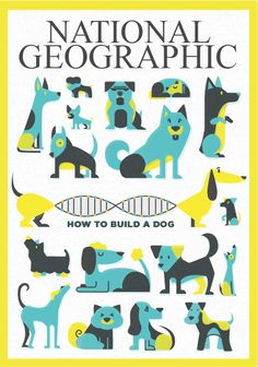 """Fictitious National Geographic covers made for Illustration class. The article was for """"How to Build A Dog"""" and covered genetic modification across breeds. Has two cover options.Art Direction: Jason Kernavich BY: Madeline Persson  https://www.behance.net/MadelinePersson @maddiepersson"""