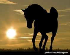 Arabian Horse Pictures: A Noble Ancient Breed