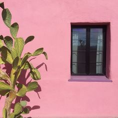 29 Palms Inn #color #cactus #pink