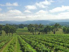 Yarra Valley, Yarra Valley Wineries, Best day trips in Melbourne,