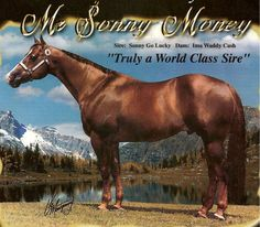 My colt's grand sire on Lady's side.