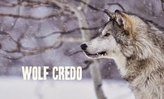 White Wolf : Wolf Credo: What Wisdom Can A Pack of Wolves Teach You?