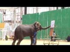 CIRCUS    ELEPHANT     SHOW Elephant, Youtube, Elephants, Youtubers, Youtube Movies