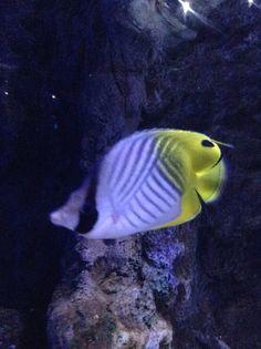Ocean Park, Aquarium, Fish, Pets, Animals, Fish Stand, Animals And Pets, Animales, Animaux