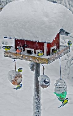 Winter in the birds restaurant, Sweden. Photography Marita Toftgard