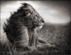 Nick Brandt Photography windswept