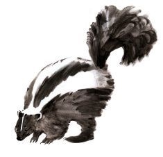 Watercolor illustration of a skunk in white background. illustration