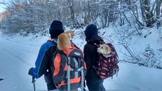 Hiking with a dog and a cat. North Face Backpack, The North Face, Greece, Hiking, Cats, Pictures, Greece Country, Walks, Photos
