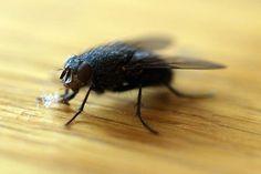 Dosada zvana muha! Učinite svoju kuću zabranjenom zonom za njih! Evo kako! ~ Kuhinja i Recepti Bee, Animals, Homemade, Animales, Animaux, Bees, Animal Memes, Hand Made, Animal